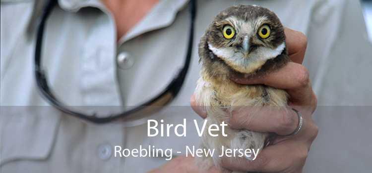 Bird Vet Roebling - New Jersey