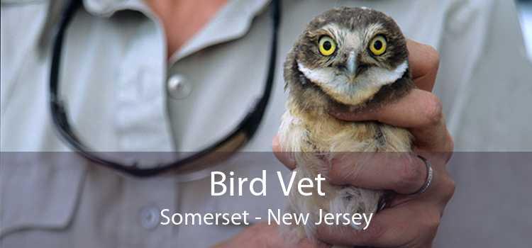 Bird Vet Somerset - New Jersey