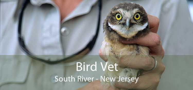 Bird Vet South River - New Jersey