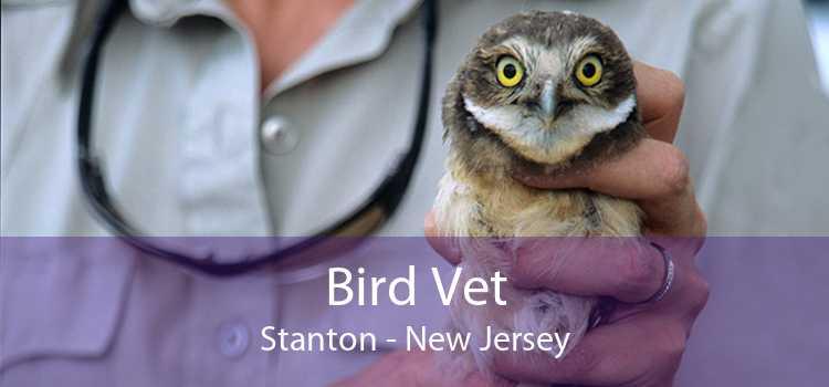 Bird Vet Stanton - New Jersey