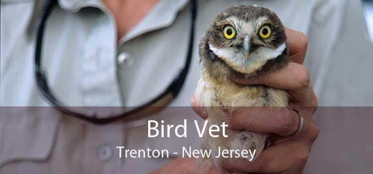 Bird Vet Trenton - New Jersey