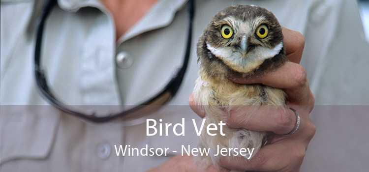 Bird Vet Windsor - New Jersey