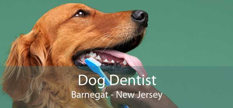 Dog Dentist Barnegat - New Jersey