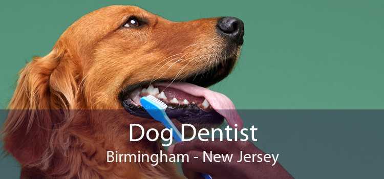 Dog Dentist Birmingham - New Jersey