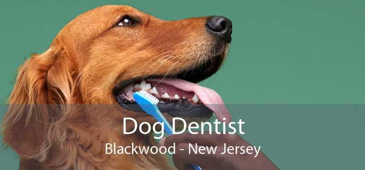Dog Dentist Blackwood - New Jersey