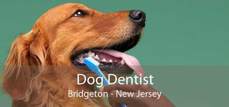 Dog Dentist Bridgeton - New Jersey