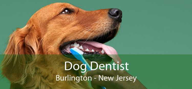 Dog Dentist Burlington - New Jersey