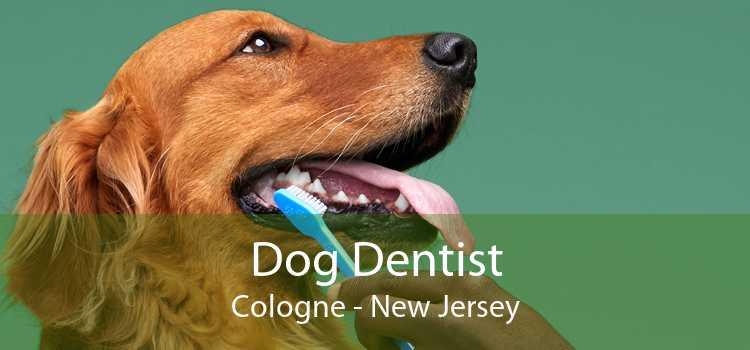 Dog Dentist Cologne - New Jersey