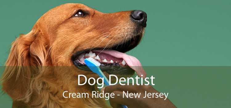 Dog Dentist Cream Ridge - New Jersey