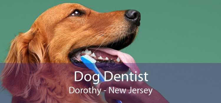 Dog Dentist Dorothy - New Jersey