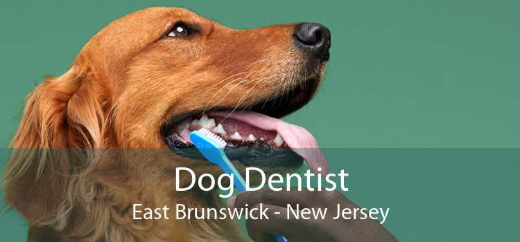 Dog Dentist East Brunswick - New Jersey
