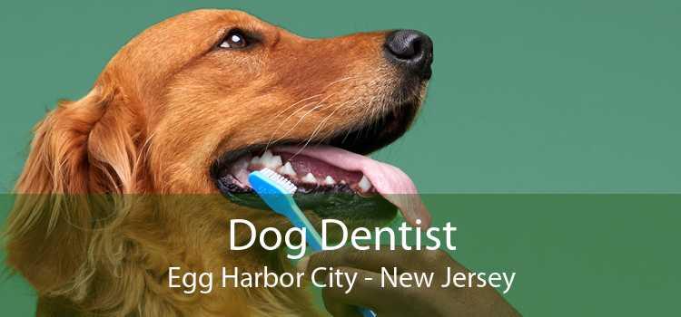 Dog Dentist Egg Harbor City - New Jersey