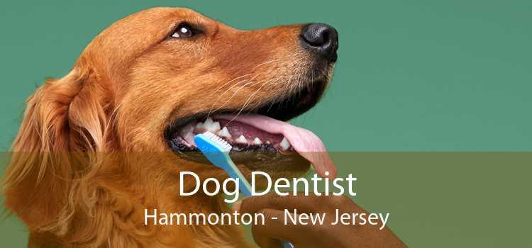 Dog Dentist Hammonton - New Jersey