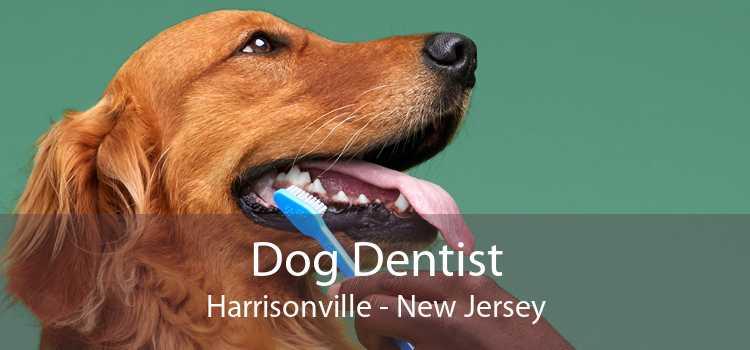 Dog Dentist Harrisonville - New Jersey