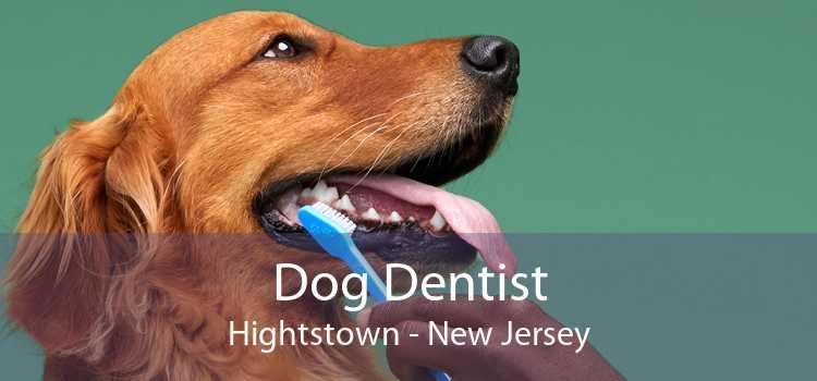 Dog Dentist Hightstown - New Jersey