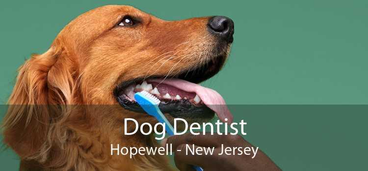 Dog Dentist Hopewell - New Jersey