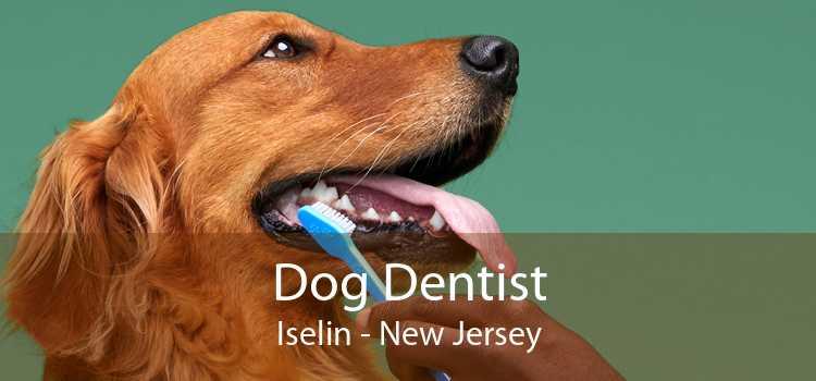 Dog Dentist Iselin - New Jersey