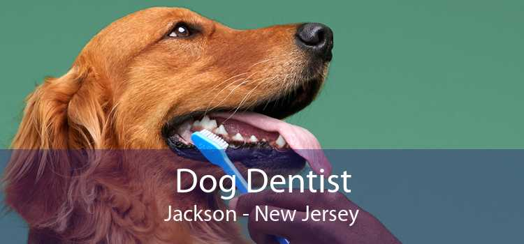 Dog Dentist Jackson - New Jersey