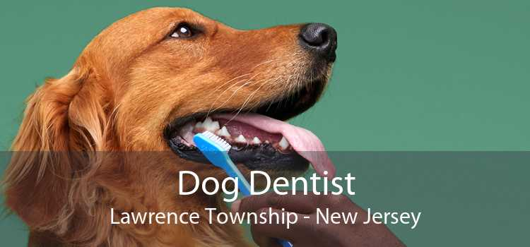 Dog Dentist Lawrence Township - New Jersey