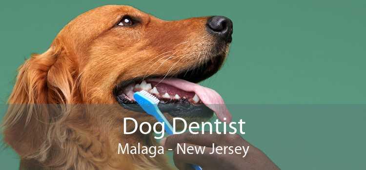 Dog Dentist Malaga - New Jersey