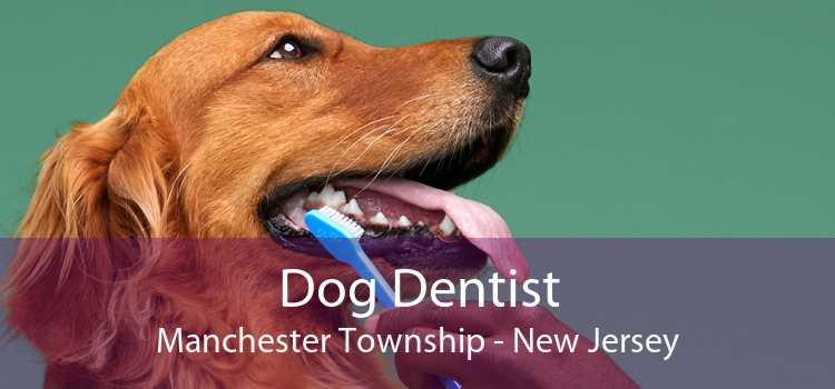 Dog Dentist Manchester Township - New Jersey
