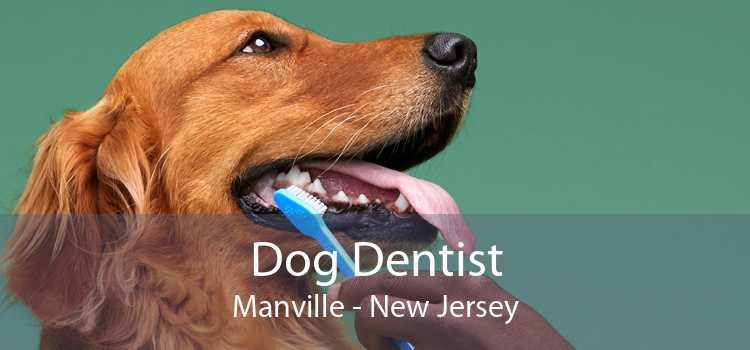 Dog Dentist Manville - New Jersey