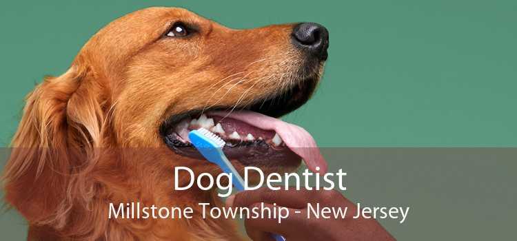 Dog Dentist Millstone Township - New Jersey