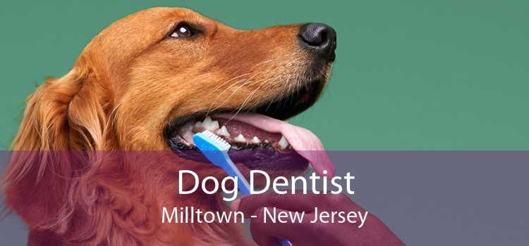 Dog Dentist Milltown - New Jersey