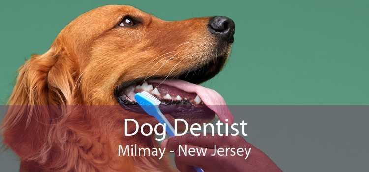 Dog Dentist Milmay - New Jersey