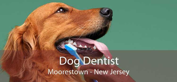 Dog Dentist Moorestown - New Jersey