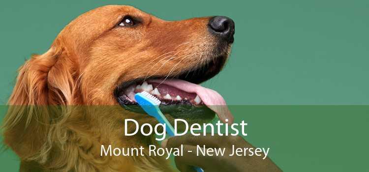 Dog Dentist Mount Royal - New Jersey