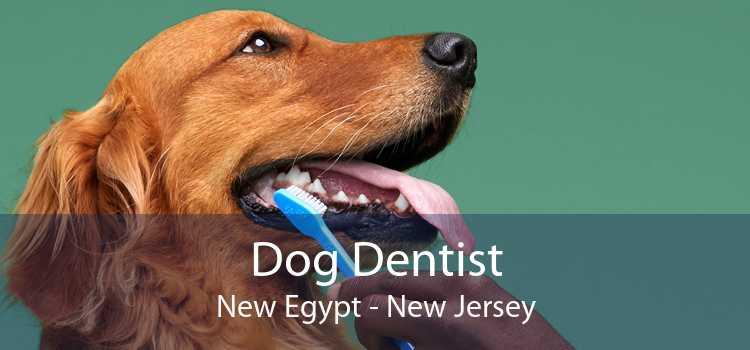 Dog Dentist New Egypt - New Jersey