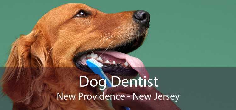 Dog Dentist New Providence - New Jersey