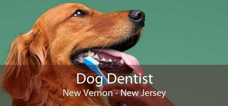 Dog Dentist New Vernon - New Jersey