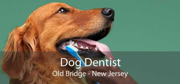 Dog Dentist Old Bridge - New Jersey