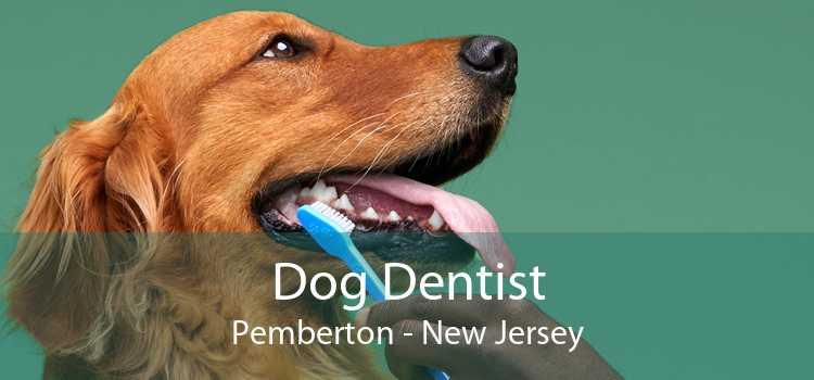 Dog Dentist Pemberton - New Jersey