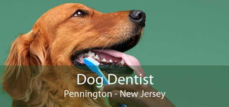 Dog Dentist Pennington - New Jersey
