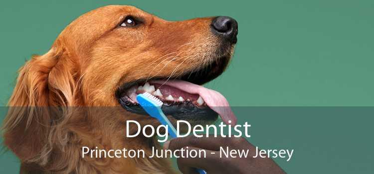 Dog Dentist Princeton Junction - New Jersey
