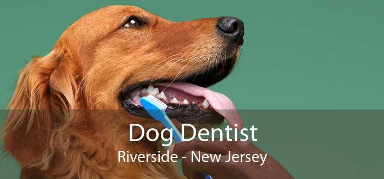 Dog Dentist Riverside - New Jersey