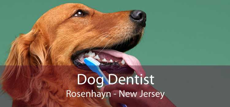 Dog Dentist Rosenhayn - New Jersey