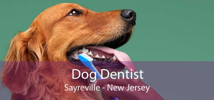 Dog Dentist Sayreville - New Jersey