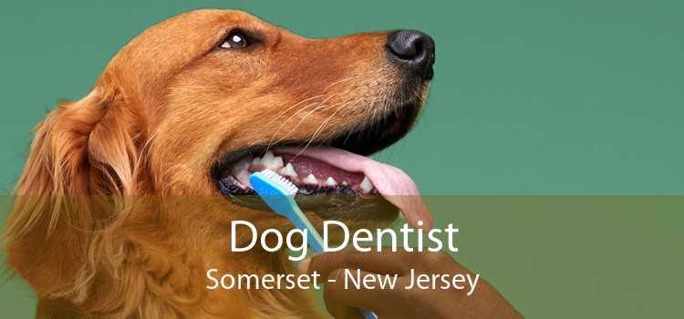 Dog Dentist Somerset - New Jersey
