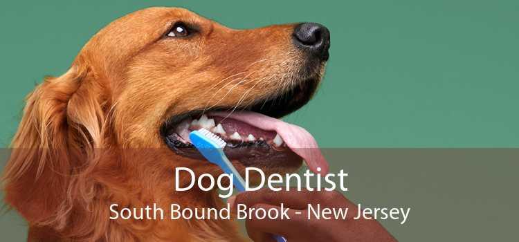 Dog Dentist South Bound Brook - New Jersey