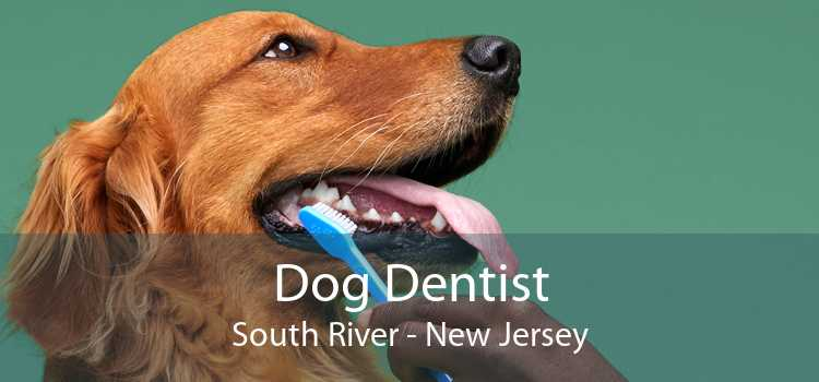 Dog Dentist South River - New Jersey