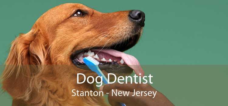 Dog Dentist Stanton - New Jersey