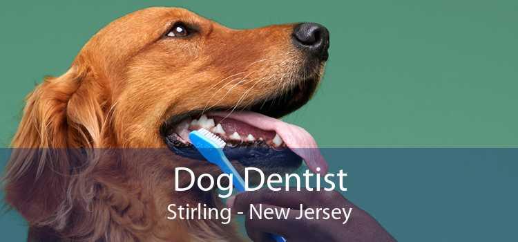 Dog Dentist Stirling - New Jersey