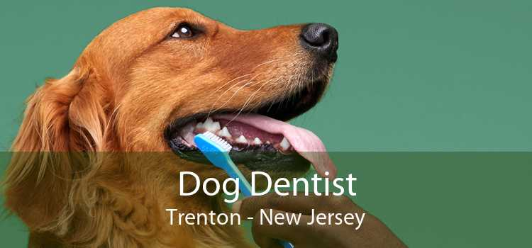 Dog Dentist Trenton - New Jersey