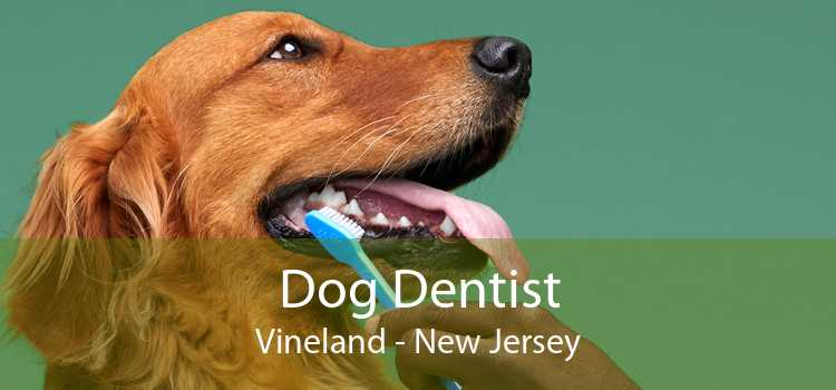 Dog Dentist Vineland - New Jersey