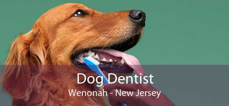 Dog Dentist Wenonah - New Jersey