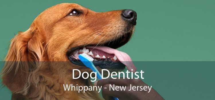 Dog Dentist Whippany - New Jersey
